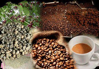Il famoso caffè di Mokha-