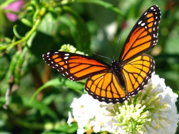 Yucatan butterfly mariposa