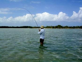 Yucatan punta Allen