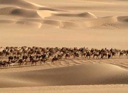 Centinaia di dromedari in viaggio attraversano il Grand Erg di Bilma