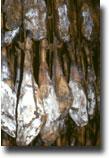 jamòn de pata Baia di Langoustier
