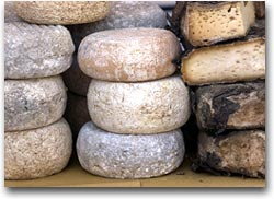 Terra Madre Esposizione di formaggi