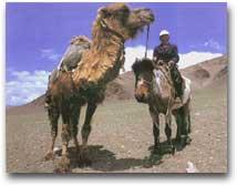 Nomade a cavallo