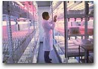 Il Cip a Lima raccoglie dati su migliaia di specie di tuberi andini.