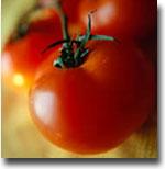OGM Pomodoro