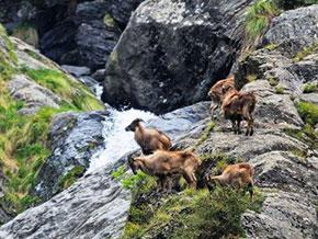 parco Great Himalayan National Park