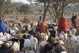 Tanzania, pastori Masai