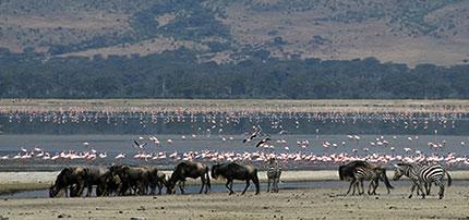 Tanzania, animali liberi nel loro ambiente