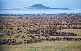 Tanzania, Parco del Serengeti. Animali durante l'annuale migrazione