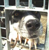 Trovatello in rifugio (Foto: Lega nazionale per la difesa del cane)