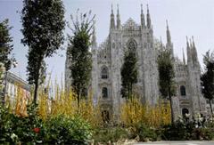 Milano rinuncia agli alberi di Piano? Sapevate che…