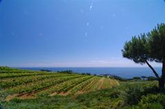 Bacco sbarca sull'Isola d'Elba