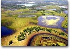 Pantanal, tra acqua e cielo