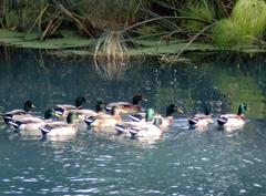 Biodiversità nella riserva del Ciane