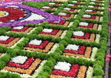 I fiori visti da vicino