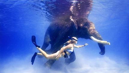 Mari indiani Nuotata con un insolito compagno, un piccolo di elefante