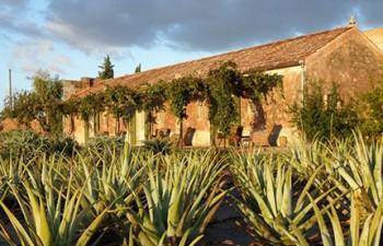 tpur A Martano (Lecce) tra le benefiche piante di Aloe