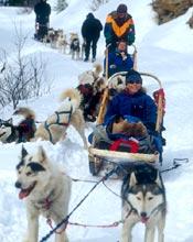 Escursioni in slitta in Montana