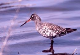 Turismo e natura al delta del Po