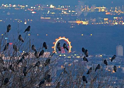 Le luci della Riesenrad, la grande ruota panoramica nel parco del Prater. Photo: Wiener Wildnis, vienna.info