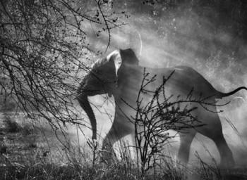 Genesi Kafue National Park, Zambia, 2010 - © Sebastião Salgado/Amazonas Images