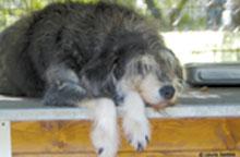 (Foto: Lega nazionale per la difesa del cane)