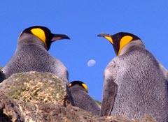 Slow Tour Pinguini ad Ushuaia, Antartide