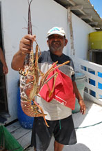 Tortuga Un'aragosta gigante pescata nelle acque intorno all'Isola della Tartaruga