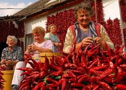 Donne intrecciano peperoncini