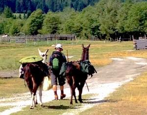 Trekking con Rocky e Paco in Alto Adige