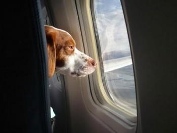 Animale domestico in aereo