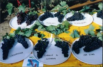 Piante-e-animali-perduti-uve
