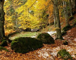 Trekking in Casentino, tra natura e spiritualità