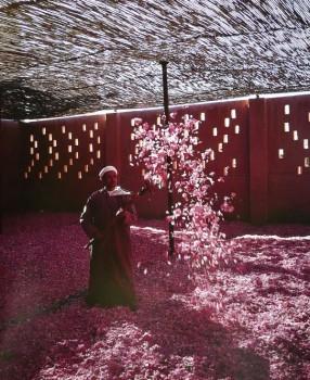 rosa Festival delle rose marocco