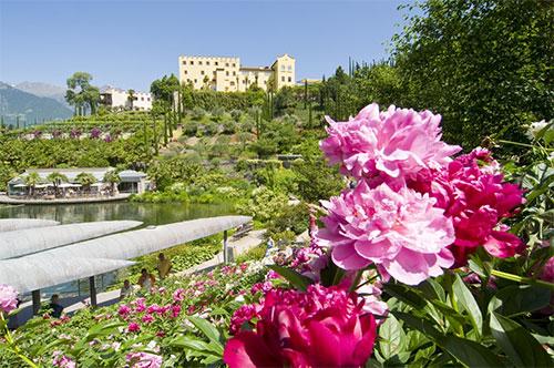 Fioriture le pi belle della prossima primavera - Giardini di marzo collezione ...