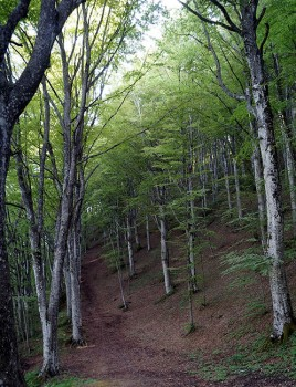 Terre di Piero foreste Casentinesi