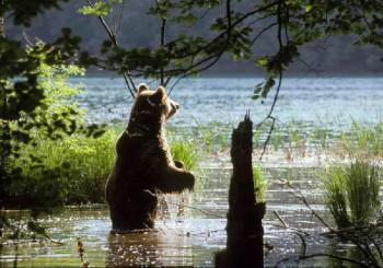 Plitvice orso