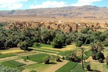 rosa marocco valle del dades