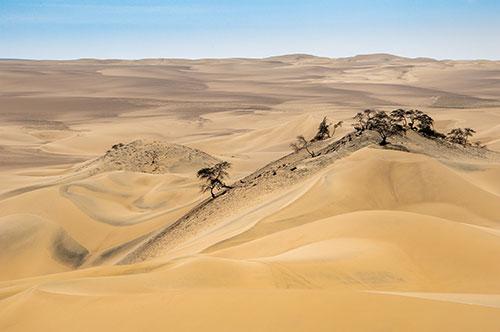 Risultati immagini per deserto americano