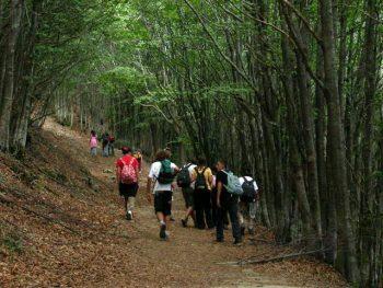 Appennino parco-foreste-casentinesi