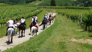 Sport a-cavallo-nei-magredi-tra-i-filari-di-vite