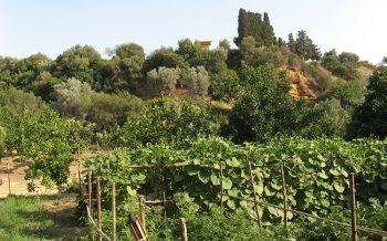 Kolymbetra giardino-della-kolymbetra-2