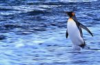 Geografia santini_antartico-750