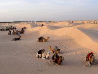Tunisia, oasi di Tozeur