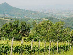 Colli Euganei, un arcipelago di colline nella Pianura Padana