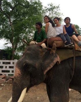 Delhi India-a-dorso-di-elefante