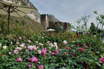 Primavera Lonato_Fiori-nella-Rocca