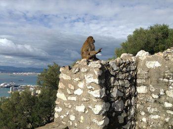 Gibilterra Rocca-Gibilterra-Macaco