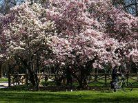 Giardini Montanelli a Milano
