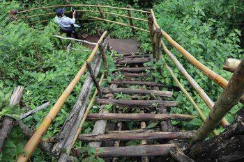 Thailandia-percorso-nella foresta